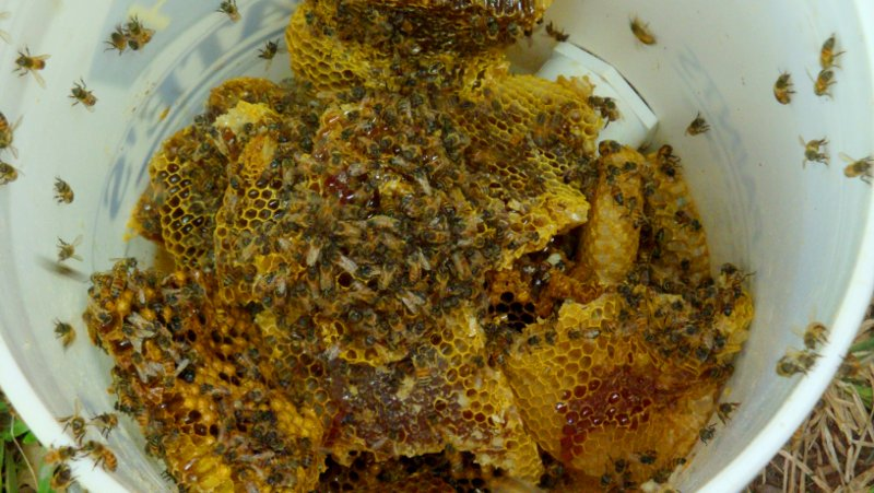 Scrap honey comb left by the hive for the bees to rob out.