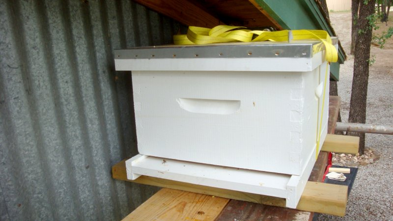 New hive positioned up near the old cavity to help stragglers find their new home.
