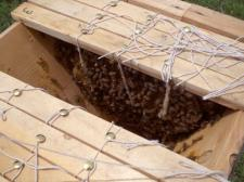 Peaceful Open Hive