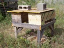 Final home for second hive, next to my first hive.