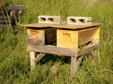 Existing KTBH hives - guess which one is the source!