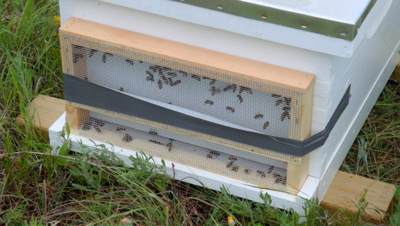 Florida Moving Screen worked excellent to keep the bees in while moving the hive.